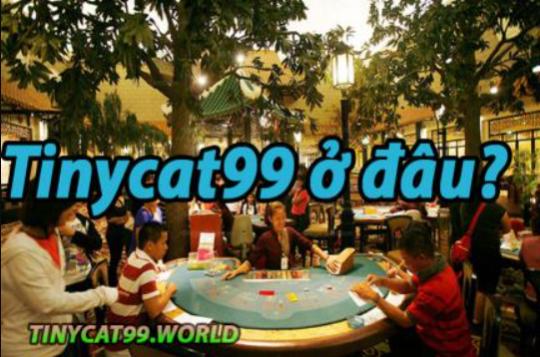 Tinycat99 ở Đâu? Nơi thành lập Chính và các Điều cần biết